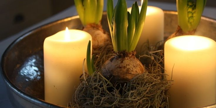 DEKORATION MED HYACINTER OG MOS - Christmas-deko with hyacinths and moss