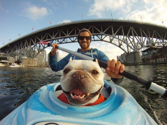 Happy kayaking dog