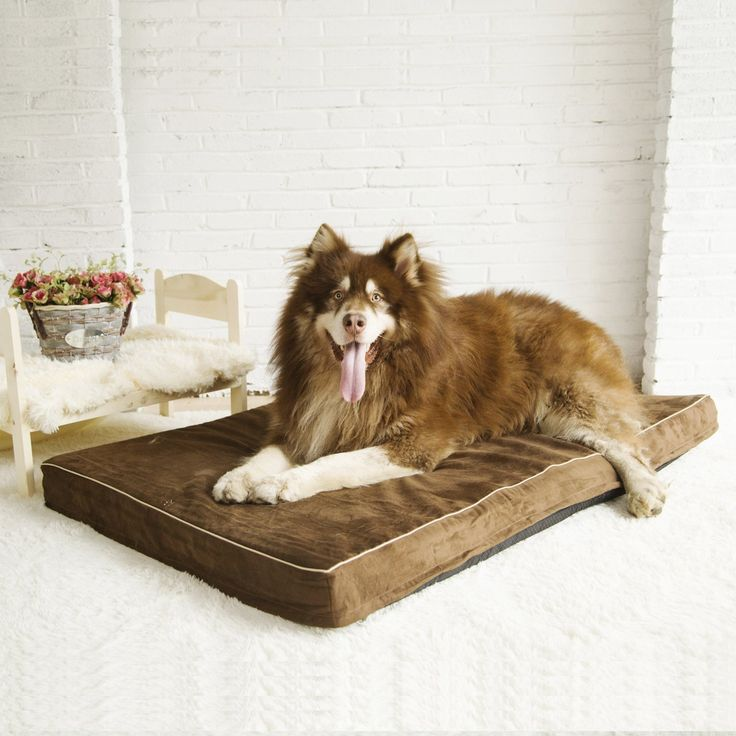 Papa Pet Solid Memory Foam Orthopedic Dog Bed with Durable Waterproof Lining | Removable & Washable Cover for Small Medium Large X-Large Dogs | Prevent and Relieve Arthritis & Hip Dysplasia of Pets
