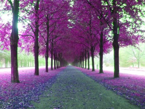 Purple Nature | nature purple - Google Images on we heart it / visual bookmark #135...