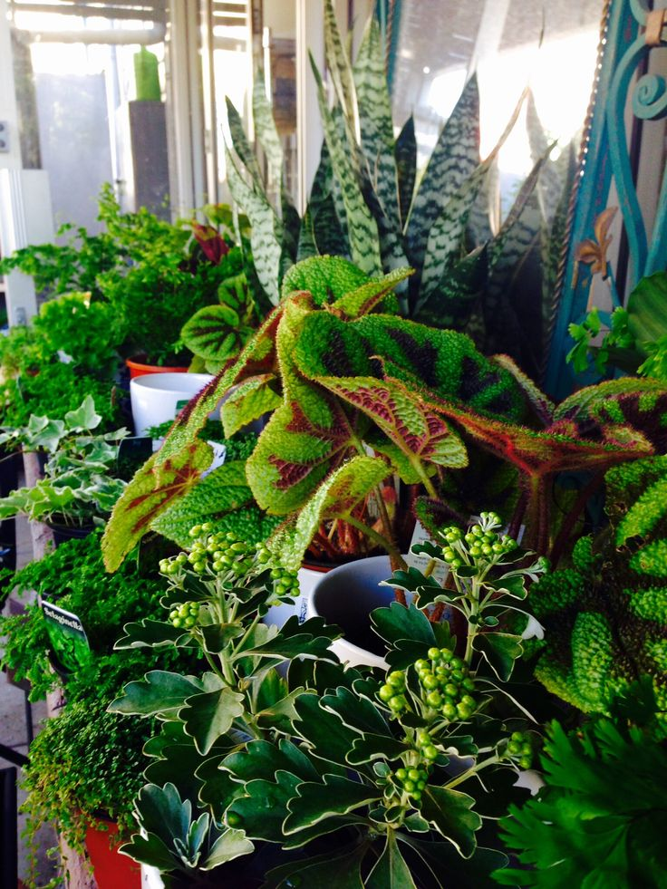 Indoor plants to brighten up any room ! Always a great gift.