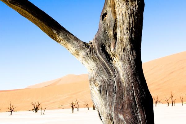 The Deadvlei salt pan in Namibia - http://www.ventureso.me/namibia/ -#namibia #dunes #de