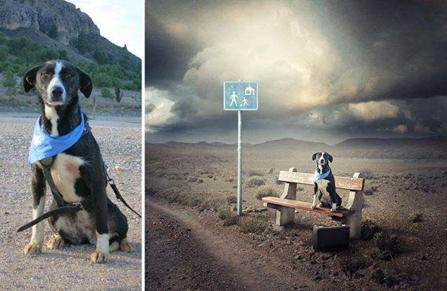 """Um fotógrafo decidiu usar seu talento para incentivar as pessoas a adotarem cachorros abandonados.  No projeto """"Help Dogs with Images"""", ele coleta imagens de animais que procuram abrigo ao redor do mundo e cria montagens surreais. As pessoas que adotarem os cachorros recebem cópias das imagens. As fotos também estão sendo comercializadas e parte da venda é revertida para os abrigos que cuidam dos animais.  É ou não é uma atitude inspiradora? http://bit.ly/1r9nAuA"""