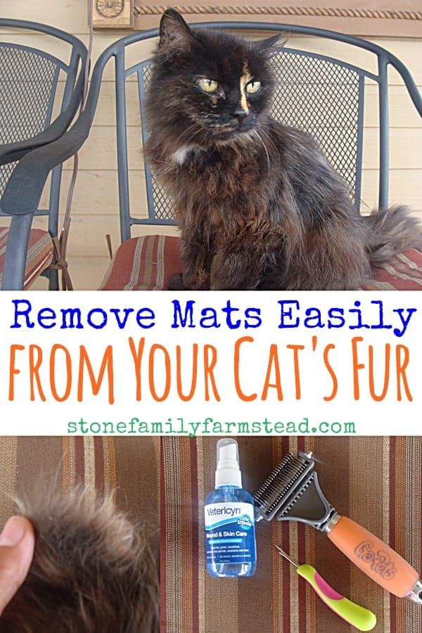f80f6953514f50d465ae050ccd11bf70 - How To Get Knots Out Of A Long Haired Cat
