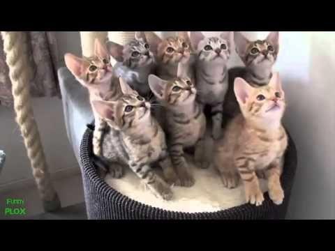 En Komik Hayvan Videoları 2013 - YouTube