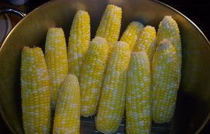 Shirley's Perfect Steamed Corn on the Cob Every Time! - RecipeZazz