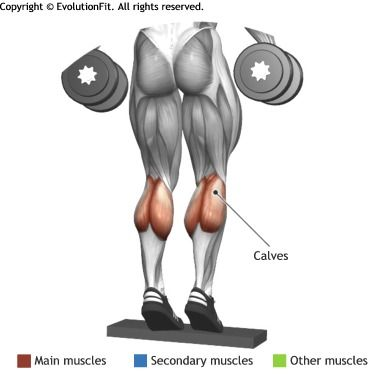 CALVES -  STANDING DUMBBLES CALF RAISE