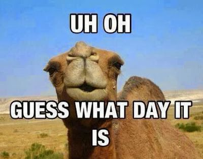 HUMP DAY!!! We're halfway there... www.allivet.com