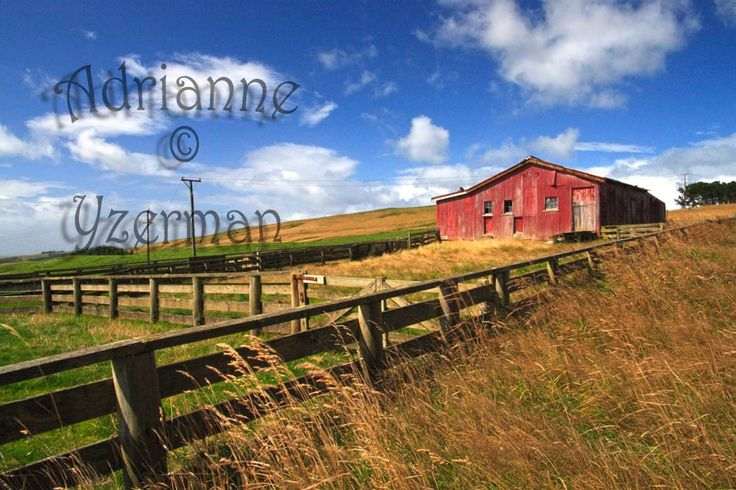 Shed at Curio Bay, Southland - New Zealand