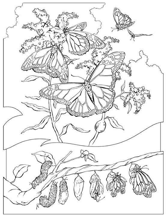 85 best insecte images on Pinterest   Buntstifte, Malbuch und Malbücher