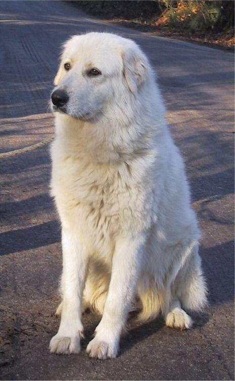3) Ooit waren honden gezelschapsdieren. Nu zijn ze woeste beesten. Anna wordt tijdens haar zoektocht naar voedsel aangevallen door een uitgehongerde Maremma. De hond geraakt gewond maar toch verzorgt Anna hem. Later in het verhaal worden ze bevriend en ze geeft de hond de naam 'Knuffel'.