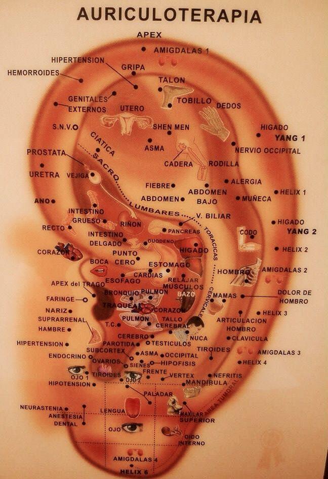 Qué es la auriculoterapia? Es una técnica proveniente de la medicina tradicional China y derivada de la acupuntura, donde la estimulación es en base a la acupresión (presión de los puntos tratados) de las microesferas que se colocan en el pabellón auricular, el cual representa todo el cuerpo humano, órganos y sistemas. En elcontrol de peso ayuda a un mayor autocontrol y adhesión al tratamiento nutricional. Es un complemento a las pautas alimentarias para la disminución del peso.