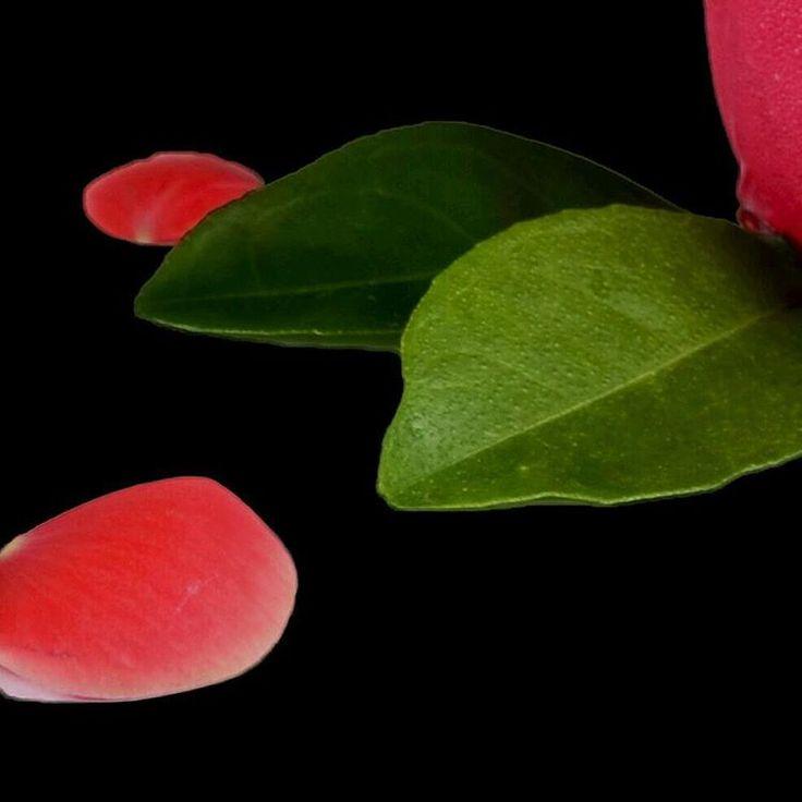 Fotografía de producto #photography #fotografia #picoftheday #fotodeldia #nikon #photooftheday #art #arte #beauty #belleza #desing #diseño #diseñografico #graphicdesign #color #food #drink #followme #sigueme #cali #colombia #talentolocal #decalisehablabien #fotografo #photographer #brand #rose #rosa #emprendedores http://unirazzi.com/ipost/1495819686889528186/?code=BTCOBR9Fht6