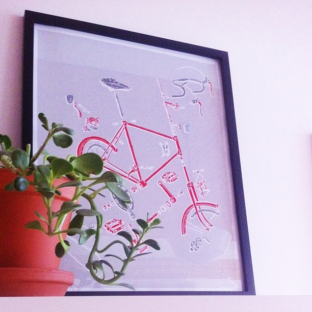 HelloDaylight's Exploded Bike screenprint goes perfectly with our new shop succulents.