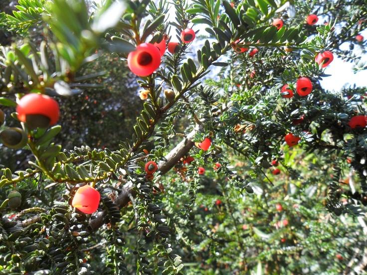 wierd berries/flowers