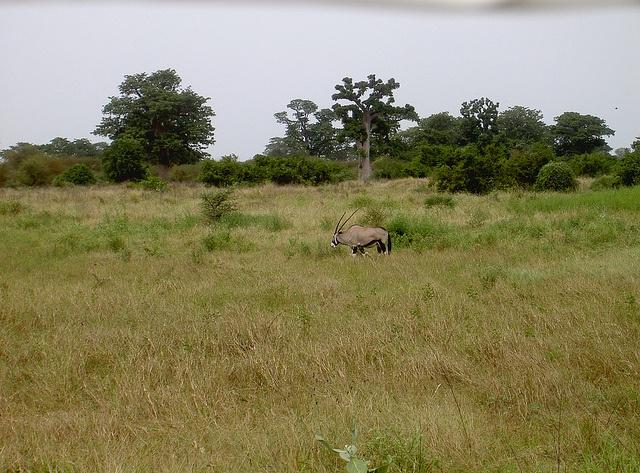 Kenya by Flygstolen, via Flickr #Kenya #Africa #Afrika #Animal #Safari #Travel #Adventure #Resa #Äventyr #Resmål #Nature #Natur #savann