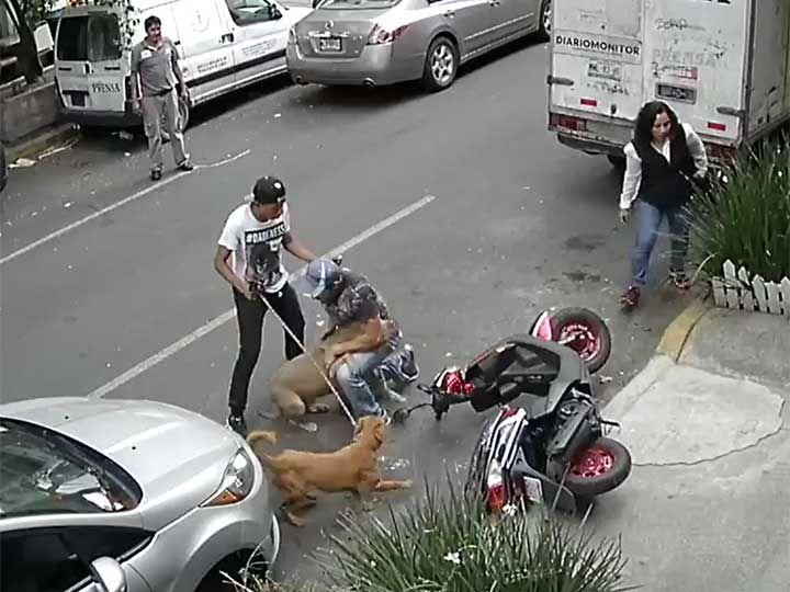 #DESTACADAS:  #Video Nuevo ataque de un pitbull en la Cuauhtémoc - López Dóriga Digital
