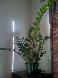 17 Best Images About Indoor Green Plants On Pinterest