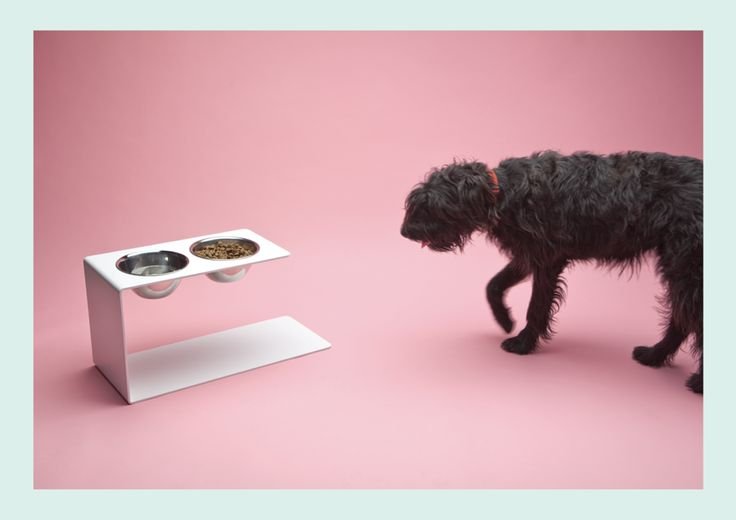 The Greedy Pivot Dog Feeder by Aparentment was unveiled at DesignMarket, a large design show held regularly in Barcelona.