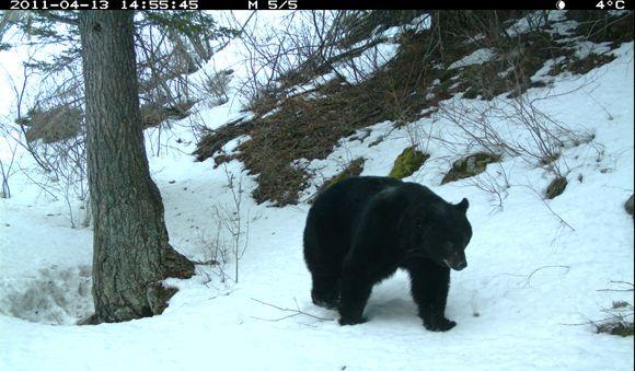 Waterton Wildlife Caught On Camera
