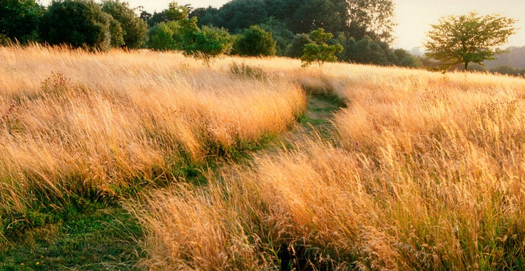 Meadow, Tom Stuart-Smith