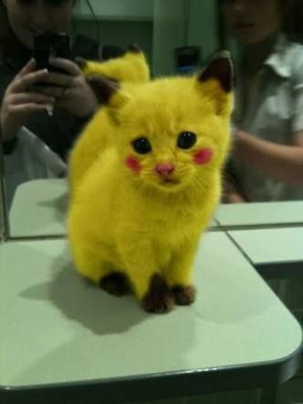Who's that cat it's pikachu