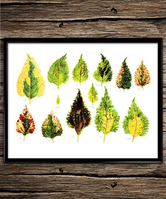 Vintage Leaf Evolution |  Vintage Prints | Science | Botanical | Home Decor | Office Decor | Printable Wall Art | 8x10 | Instant Download |