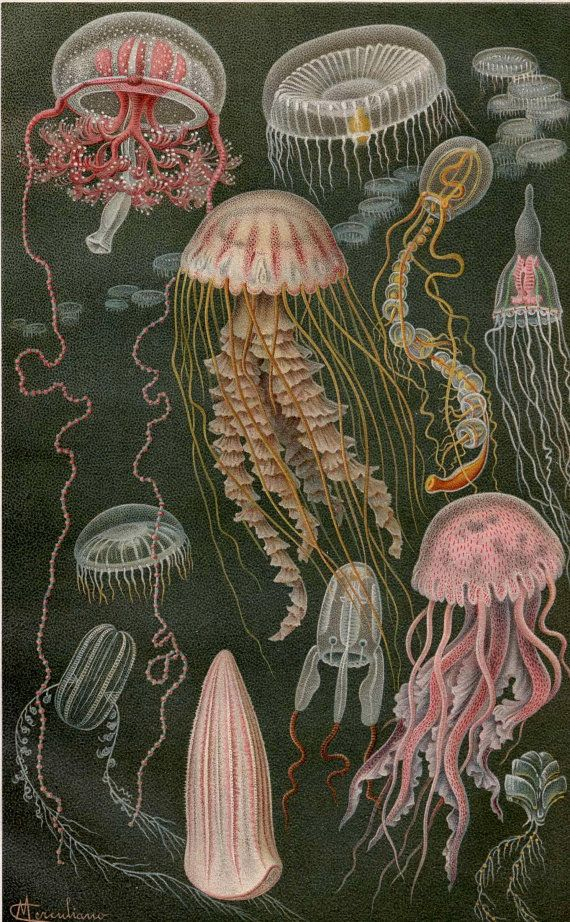 ****jelly fish could be cool in the mix***