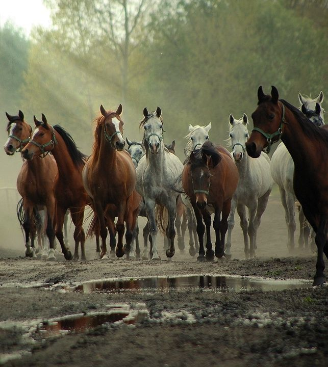 Best Savvy Horse Photos  Art Images On   Horse Art