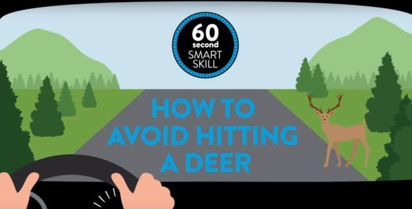 Deer Safety: Tips For Avoiding A Collision