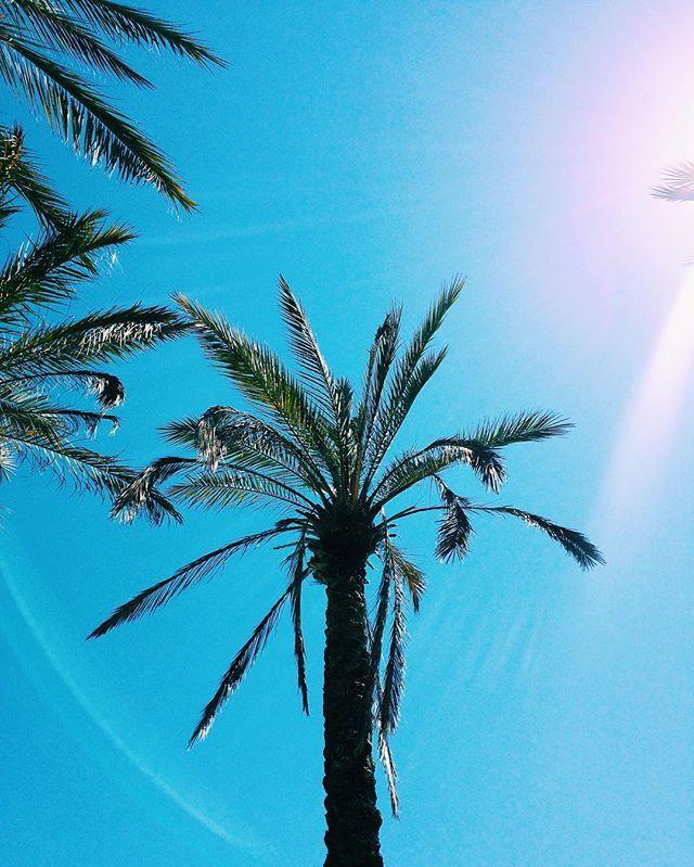Platja del Miracle - Saí hoje de Tarragona com destino Nijmegen - Holland! tchau - Passei algumas horas em Amsterdam e mostrei no snap > hittheroadgirls - Spain - Espanha - Europa - travel - dica de viagem - palm tree - summer - verao - screensaver - sun - desktop