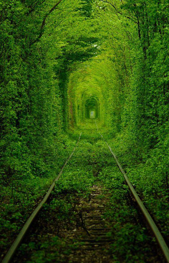 Tuneles de arboles geniales y hermosos - Taringa!