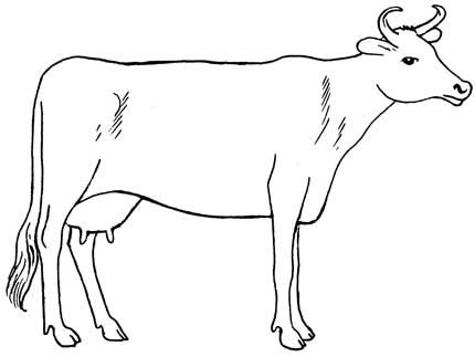 How to draw cows draw cows draw a cow