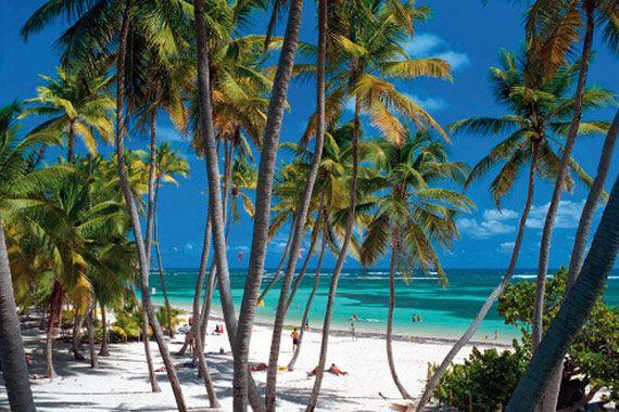 #Martinique. Palms in a wonderful Martinique's beach.