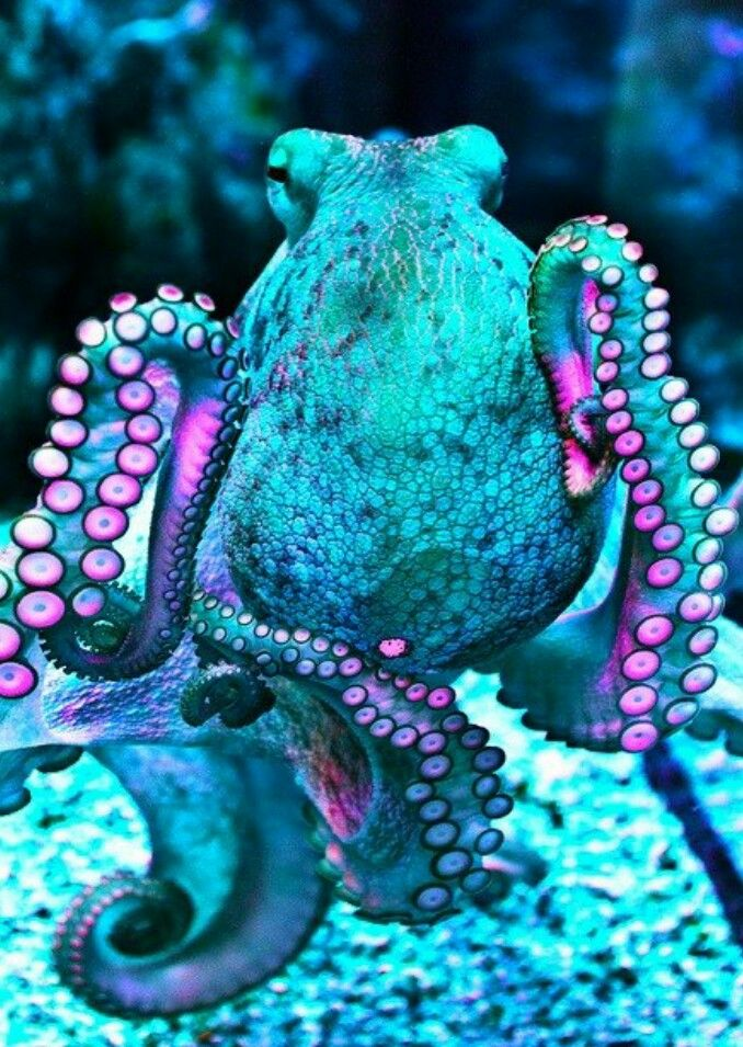Amazingly beautiful animal