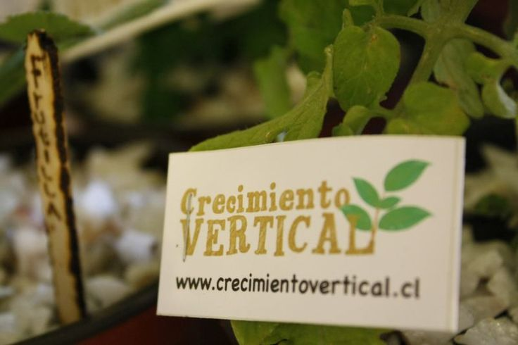 #GuiaAlmagro Disfruta los cursos y talleres eco-amigables de Crecimiento Vertical, una instancia para alcanzar una vida más sana y natural. http://www.almagro.cl/laguiaalmagro/2015/04/crecimiento-vertical/