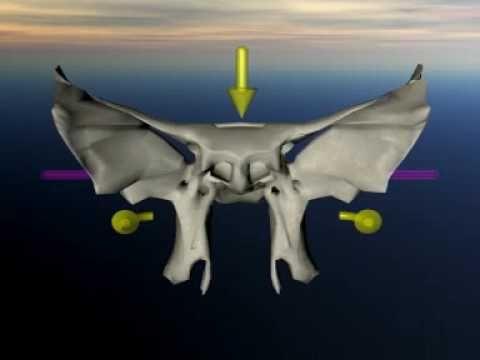 Sphenoid in craniosacral movement - YouTube