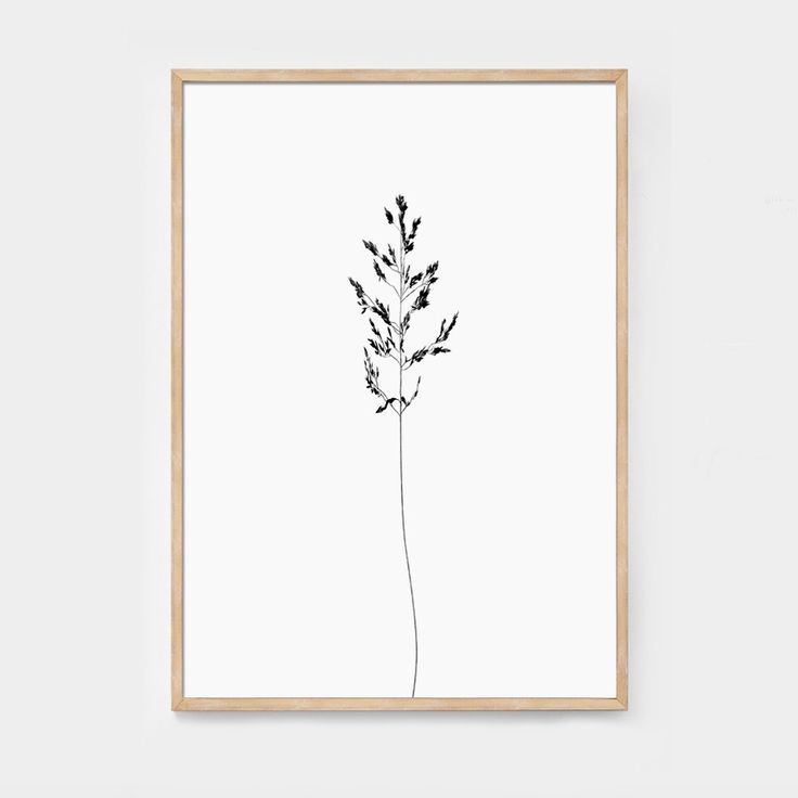 New botanic and minimalistic print for our Plant series is coming up.