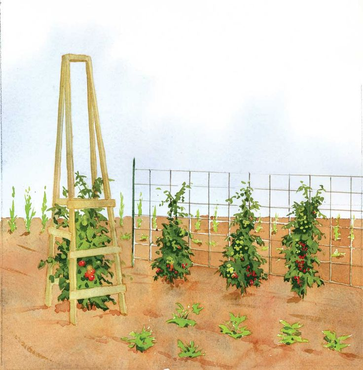 17 Best Ideas About Tomato Cages On Pinterest Staking