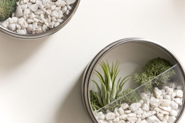 I have a thing for terrariums, yet I have none. Maybe I just like to look...   Gravel, some air plants and a magnetic tin. How easy is that?