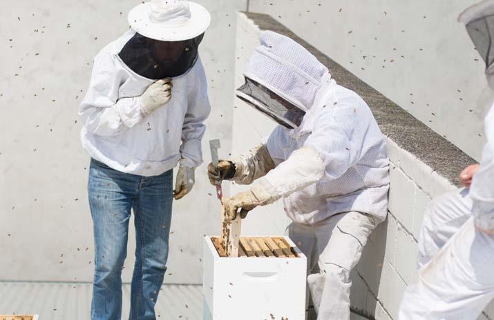 Photo: Justin Emerson  Abbotsford Rooftop Honey - COFFEE SUPREME