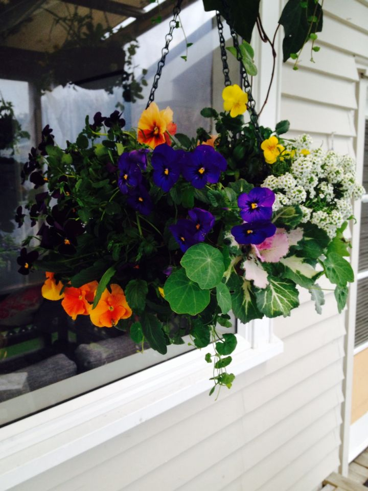 Hanging basket of mixed colour and trailing greenery
