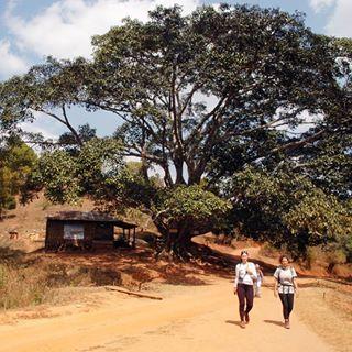 Lunch stop under a giant tree in Myanmar... Kalaw to Inle Lake Trek