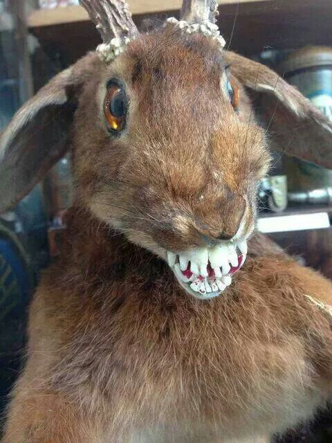 1000 Images About Spa: 1000+ Images About Taxidermy Gone Wrong On Pinterest