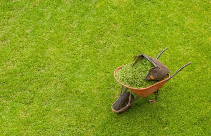Lawn Care For Beginners Plantgurus