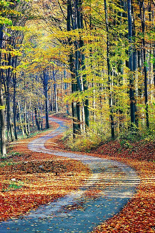 ✯ Country Lane - would love to walk along this lane, it looks so beautiful. You just know by walking there your spirit would lift & you'd feel better.
