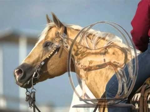 Carol Rose Ranch Video - Shining Spark - YouTube