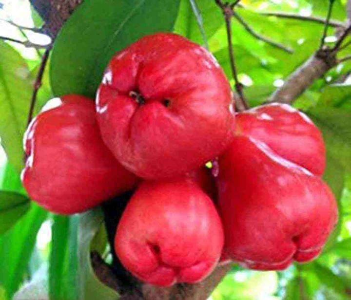 desktop bangladesh fruits pictures - photo #29