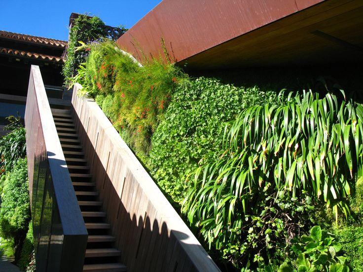 Villa Majorque, escalier et Russelia, octobre 2010. Patrick Blanch