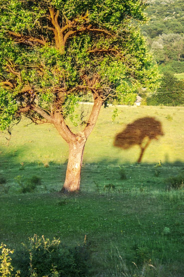 Tree shadow by An Drada on 500px